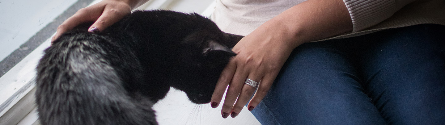 VCA Hours & Information Picture of a Woman Petting a Cat