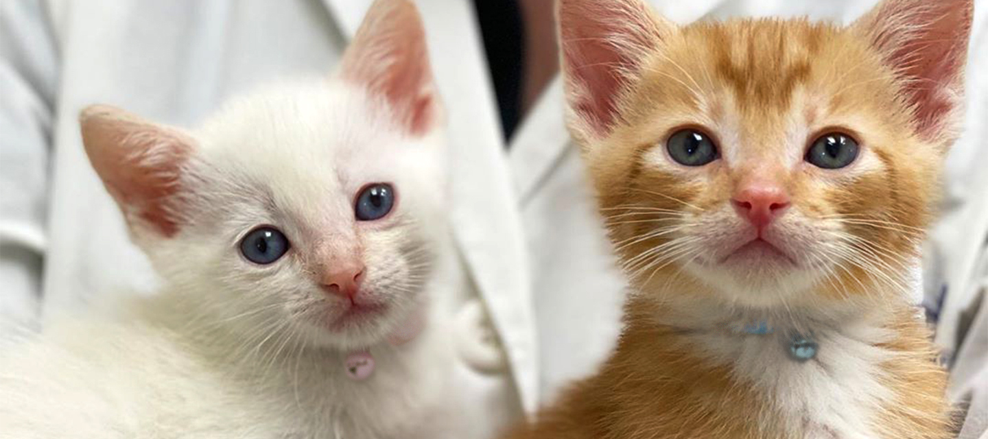 Your First Visit | VCA Cat Hospitals