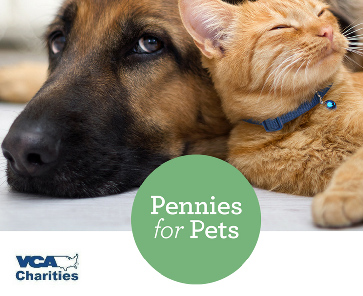 Pennis for Pets 2018
