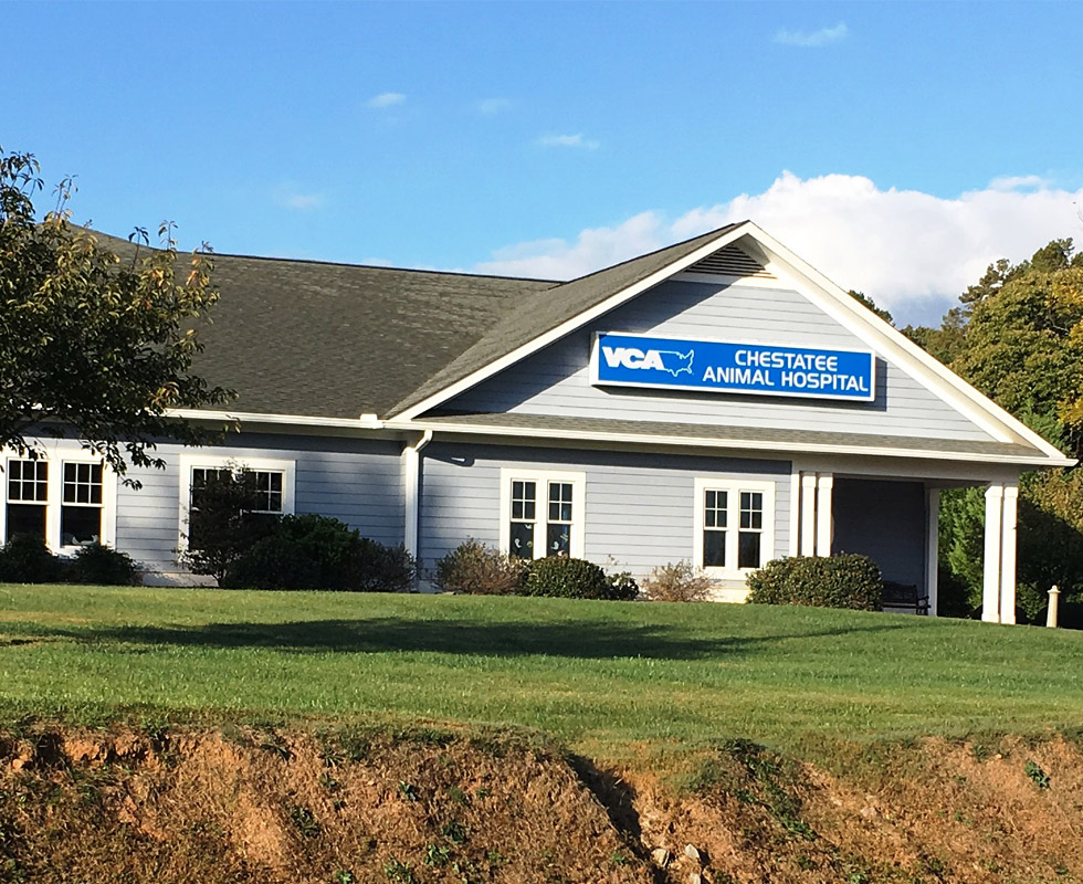 Hospital Picture of VCA Chestatee Animal Hospital