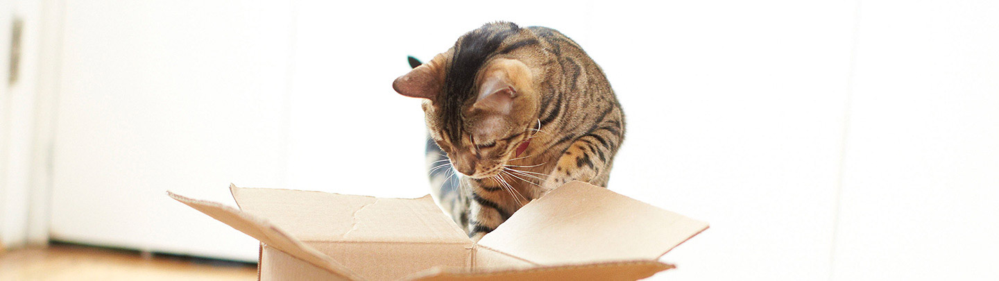 VCA Home Delivery Picture of Cat Leaping into Box