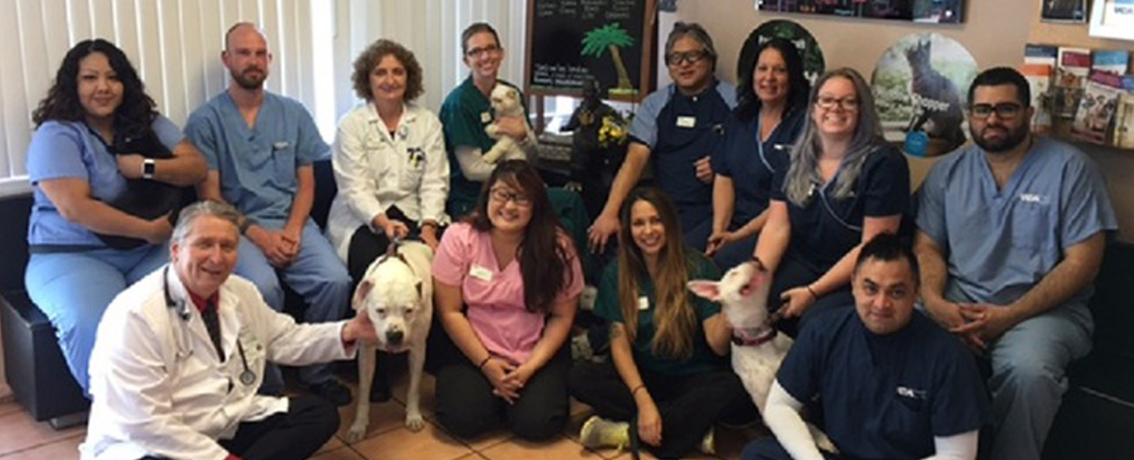 Homepage Team Picture of  VCA Clarmar Animal Hospital