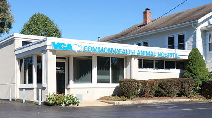 Homepage Hospital Picture of VCA Commonwealth Animal Hospital