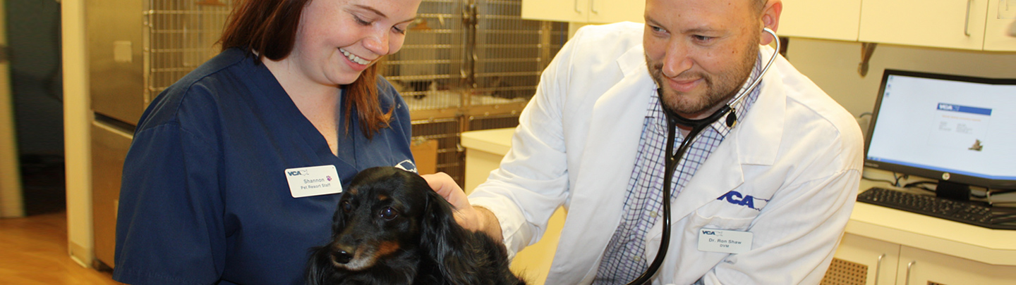 VCA Coral Springs Animal Hospital Dr Shaw Examining Molly
