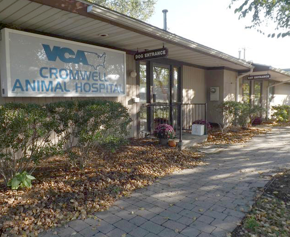Hospital Picture of  VCA Cromwell Animal Hospital