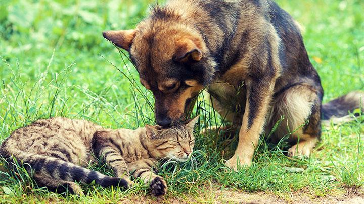 Community Partners in East Brunswick, NJ | Edgebrook Animal Hospital