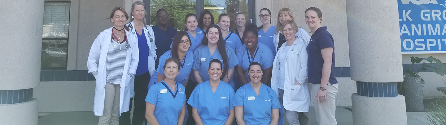 Team Picture of VCA Elk Grove Animal Hospital