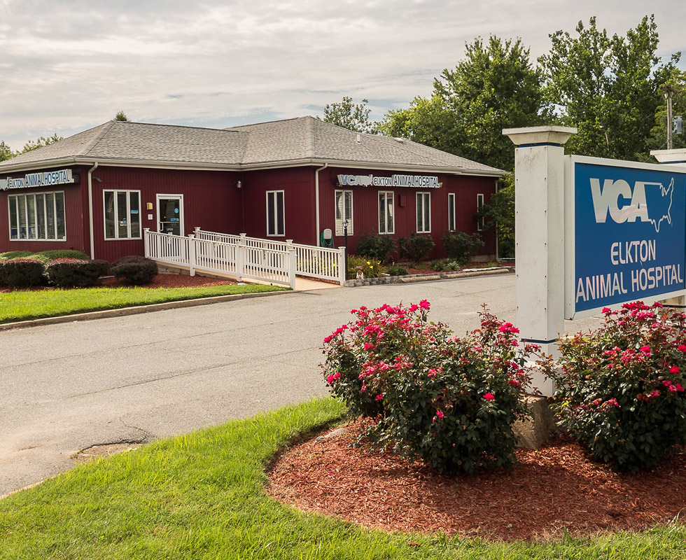 Hospital Picture of VCA Elkton Animal Hospital