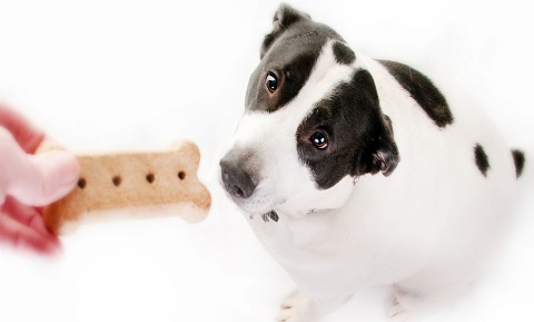 Overcoming Fears with Desensitization and Counterconditioning