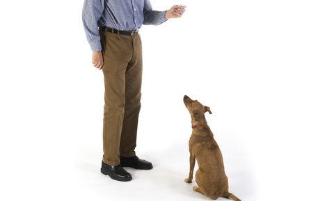 Using Punishment Effectively