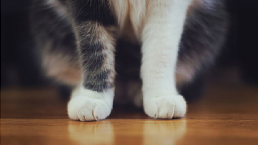 VCA Grooming Picture of Cat's Paws