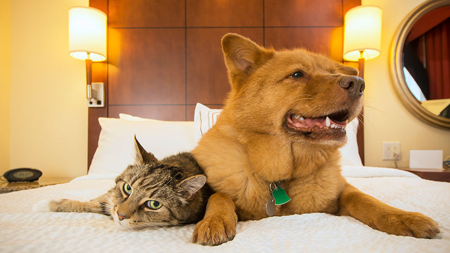 tabby cat and dog on bed