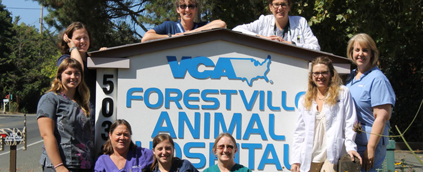Homepage Team Picture of VCA Forestville Animal Hospital