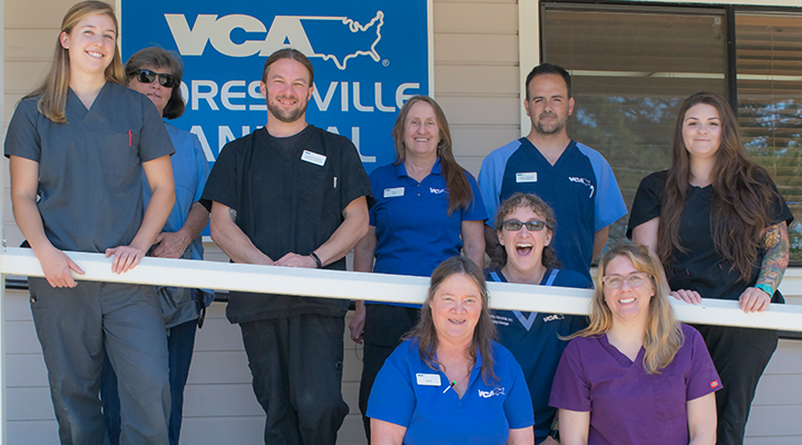 VCA Forestville Animal Hospital