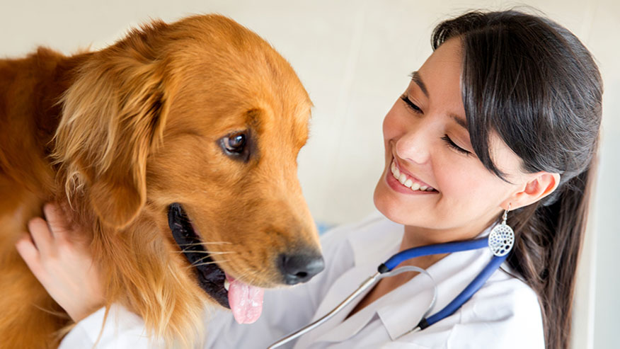 dog woman with veterinarian