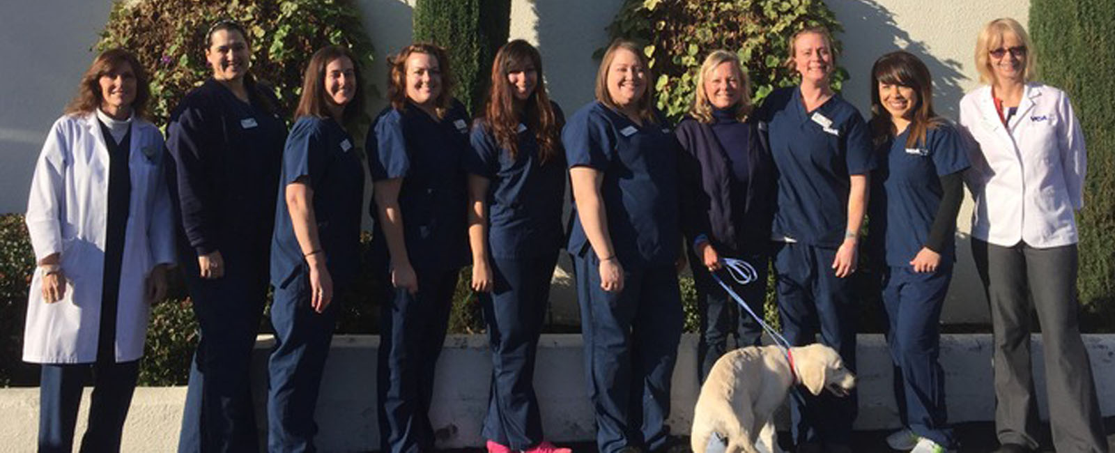 Homepage Team Picture of VCA Grossmont Animal Hospital