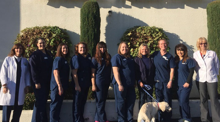 VCA Grossmont Animal Hospital - Our Team