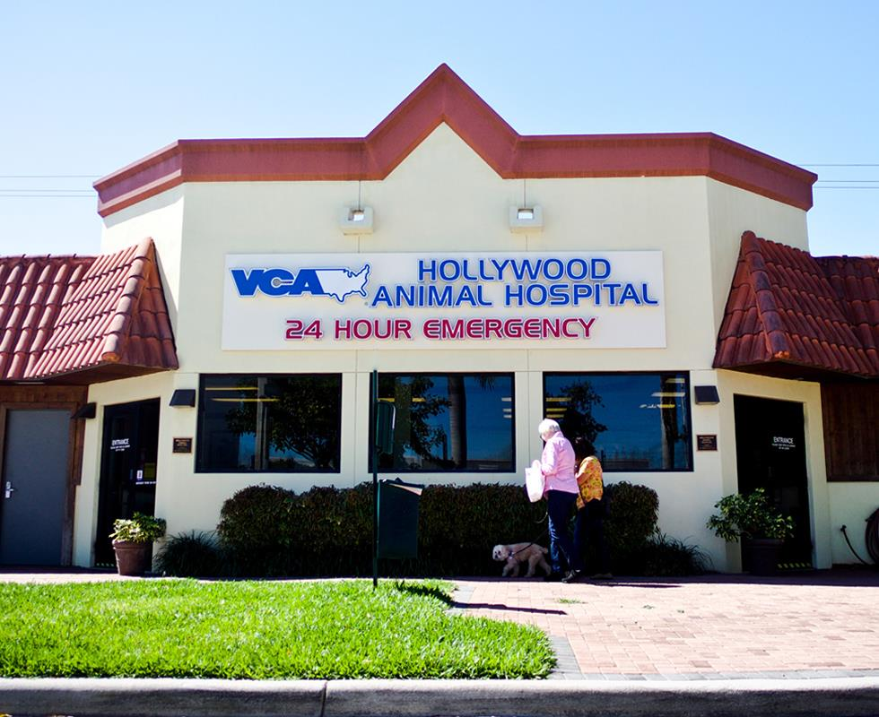 Our Hospital | VCA Hollywood Animal Hospital - Specialty