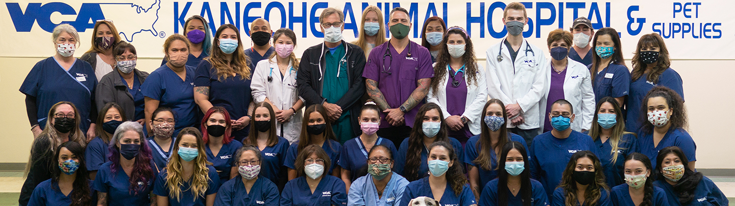 VCA Kaneohe Animal Hospital - Our Team