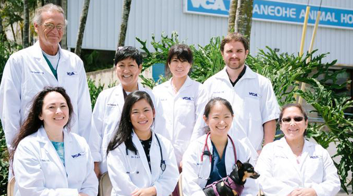 Team Picture of VCA Kaneohe Animal Hospital