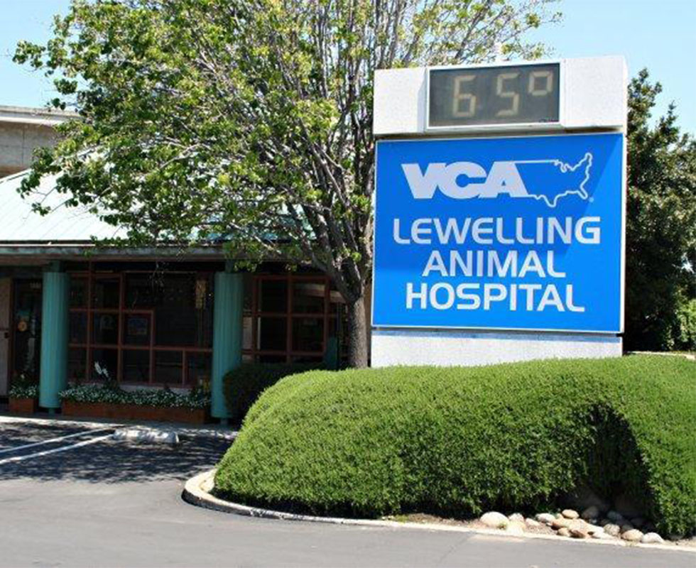 VCA Lewelling Animal Hospital - Our Hospital
