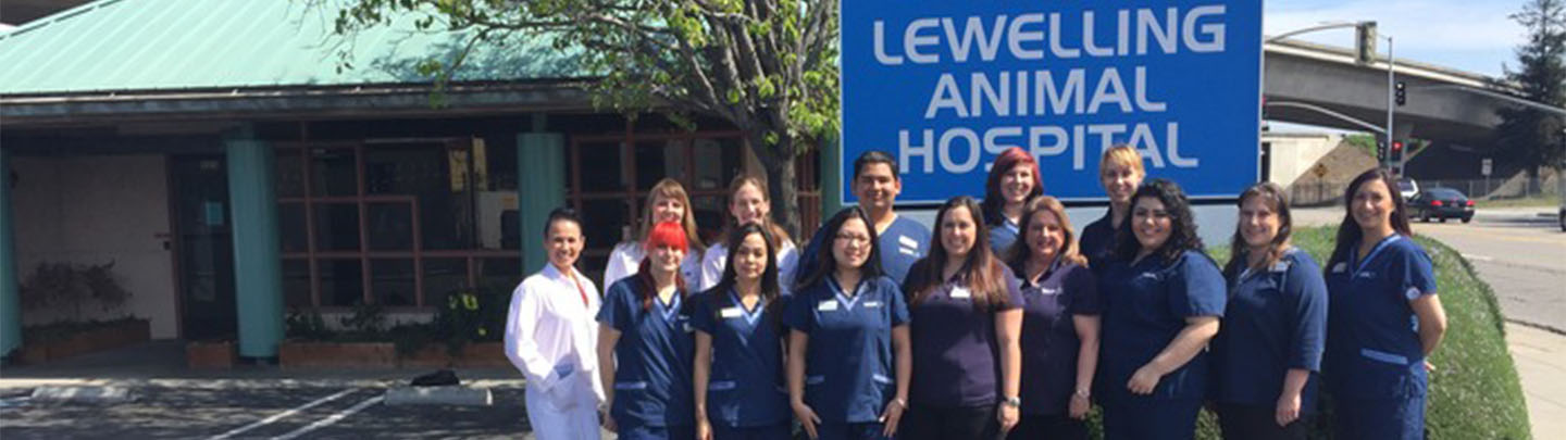 VCA Lewelling Animal Hospital - Our Team