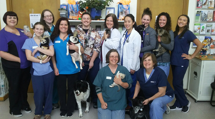 Homepage Team Picture of VCA Lynwood Animal Hospital