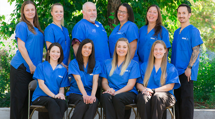 Homepage Team Picture of Madison Animal Hospital