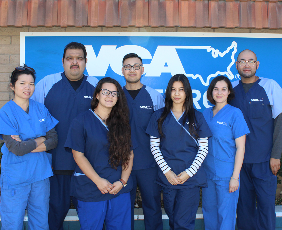 VCA Main Street Animal Hospital Veterinary Support