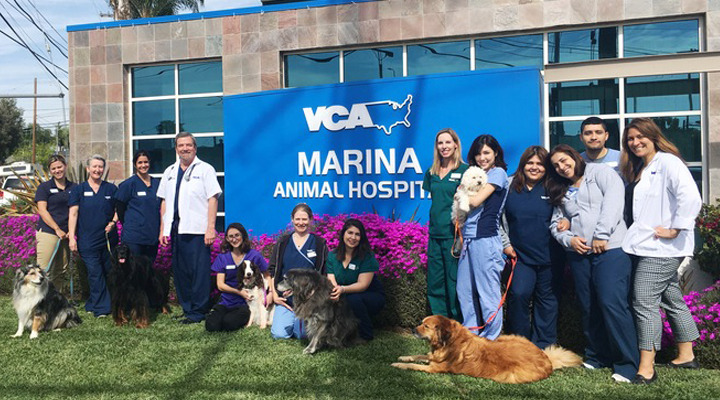 Team Picture of VCA Marina Animal Hospital