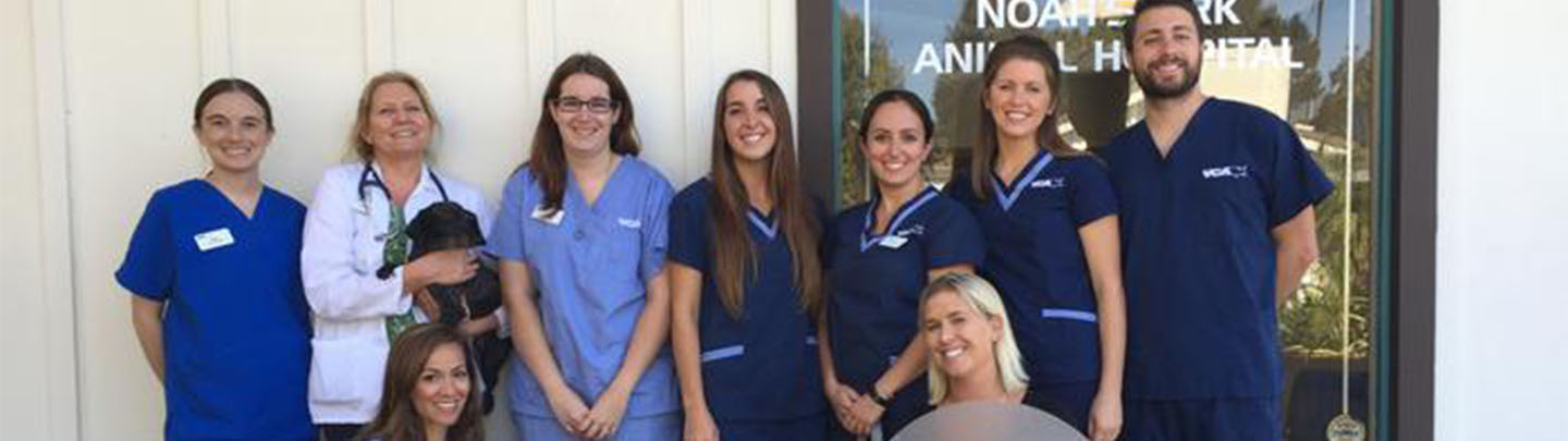 Team Picture of VCA Noah's Ark Animal Hospital