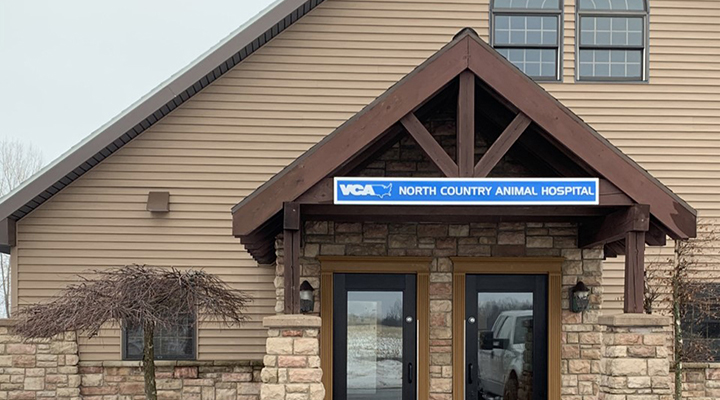Veterinarians In Watertown Ny Vca North Country Animal Hospital