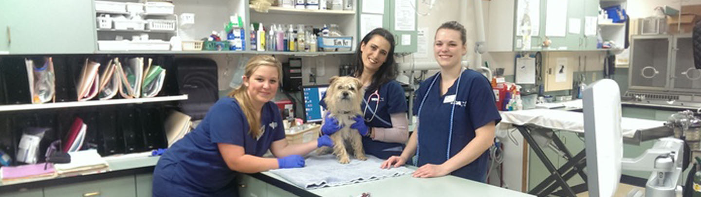 Team Picture of VCA Pacific Avenue Animal Hospital