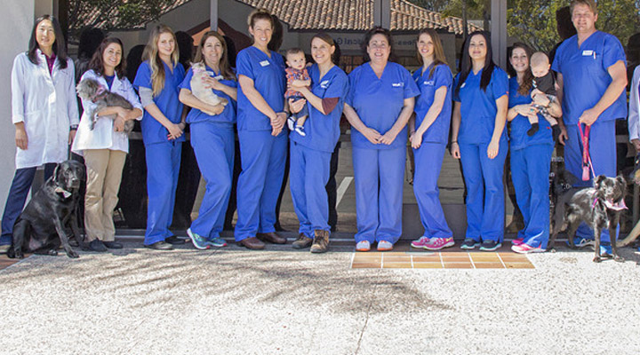 Homepage Team Picture of VCA Pacific Petcare Animal Hospital