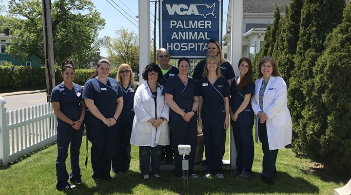 Hospital Homepage Picture of VCA Palmer Animal Hospital