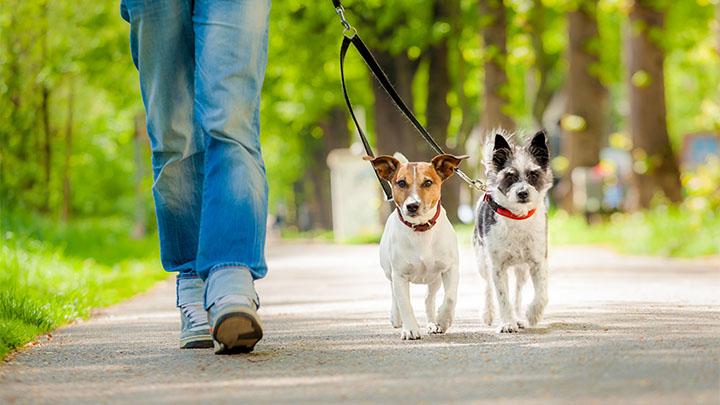 Community Partners in Cedar Park, TX | VCA Premier Animal Hospital