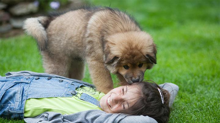 Community Partners in Cedar Park, TX | VCA Premier Animal