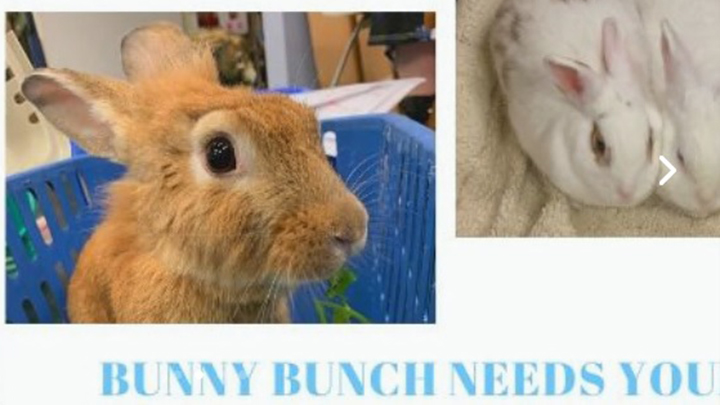 Bunny Bunch Rabbit Rescue
