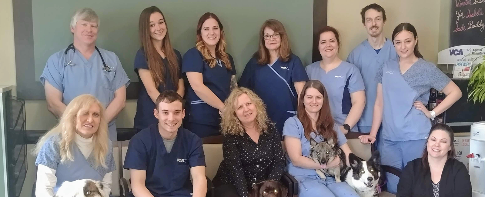 Homepage Team Picture of VCA Rotherwood Animal Hospital