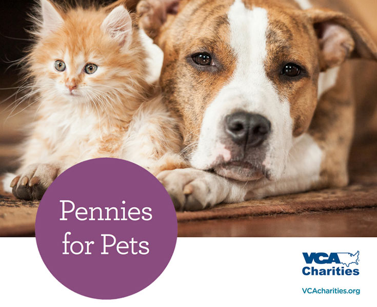A dog and a cat lay mournfully on the floor. Consider donating pennies for pets in the wake of Hurricane Harvey.