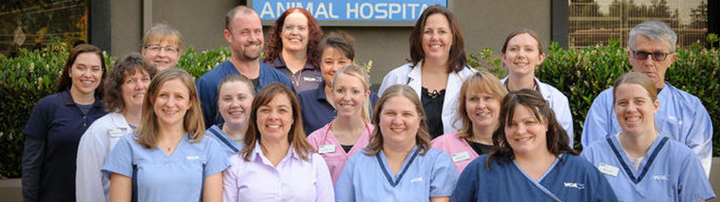 Team Picture of VCA Salem Animal Hospital