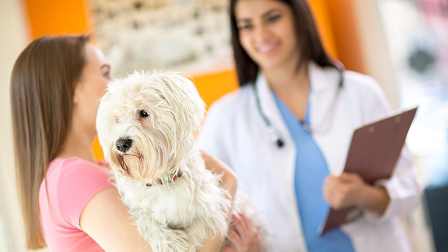 woman with dog and veterinarian
