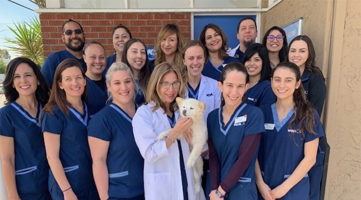 Homepage Team Picture of VCA Santa Anita Animal Hospital