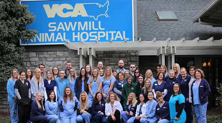 Homepage Team Picture of VCA Sawmill Animal Hospital 2019