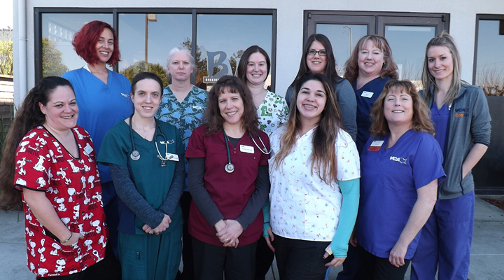 Homepage Team Picture of Sequoia Valley Animal Hospital