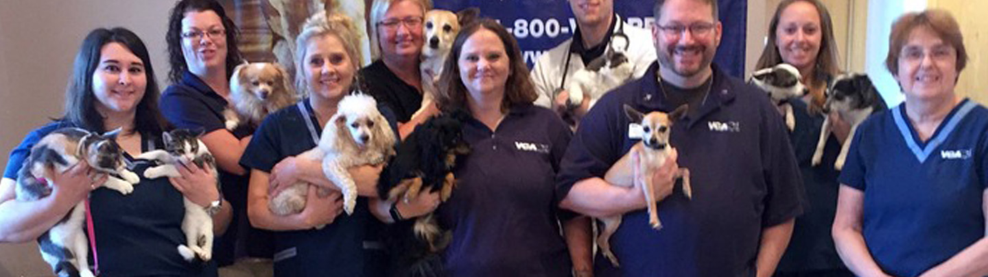Team Picture of VCA Shadeland Animal Hospital