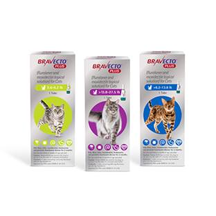 Bravecto® Plus Topical for Cats