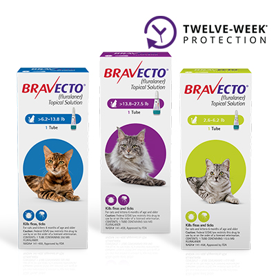 Bravecto® Topical for Cats