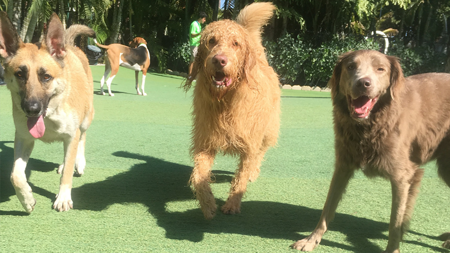 VCA Simmons Barkers Hotel & Purrington Pet Resort & Spa Dog Boarding
