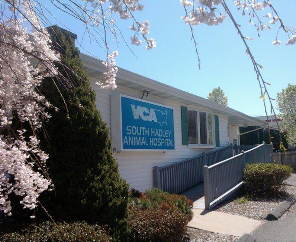 Hospital Picture of VCA South Hadley Animal Hospital